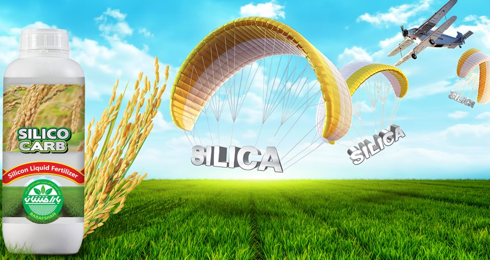 web barafshan 16 960x510 - Silico Carb For Rice